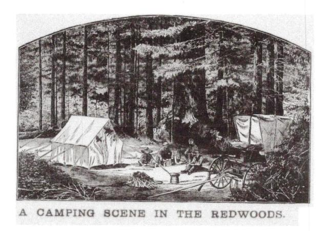 Camping Scene in the Redwoods circa 1800's